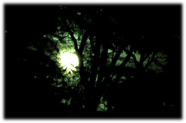 Bilde6_slow motion