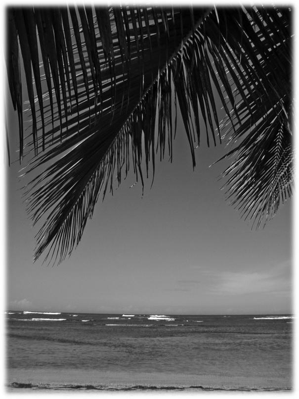 Bilde_BeachBum9